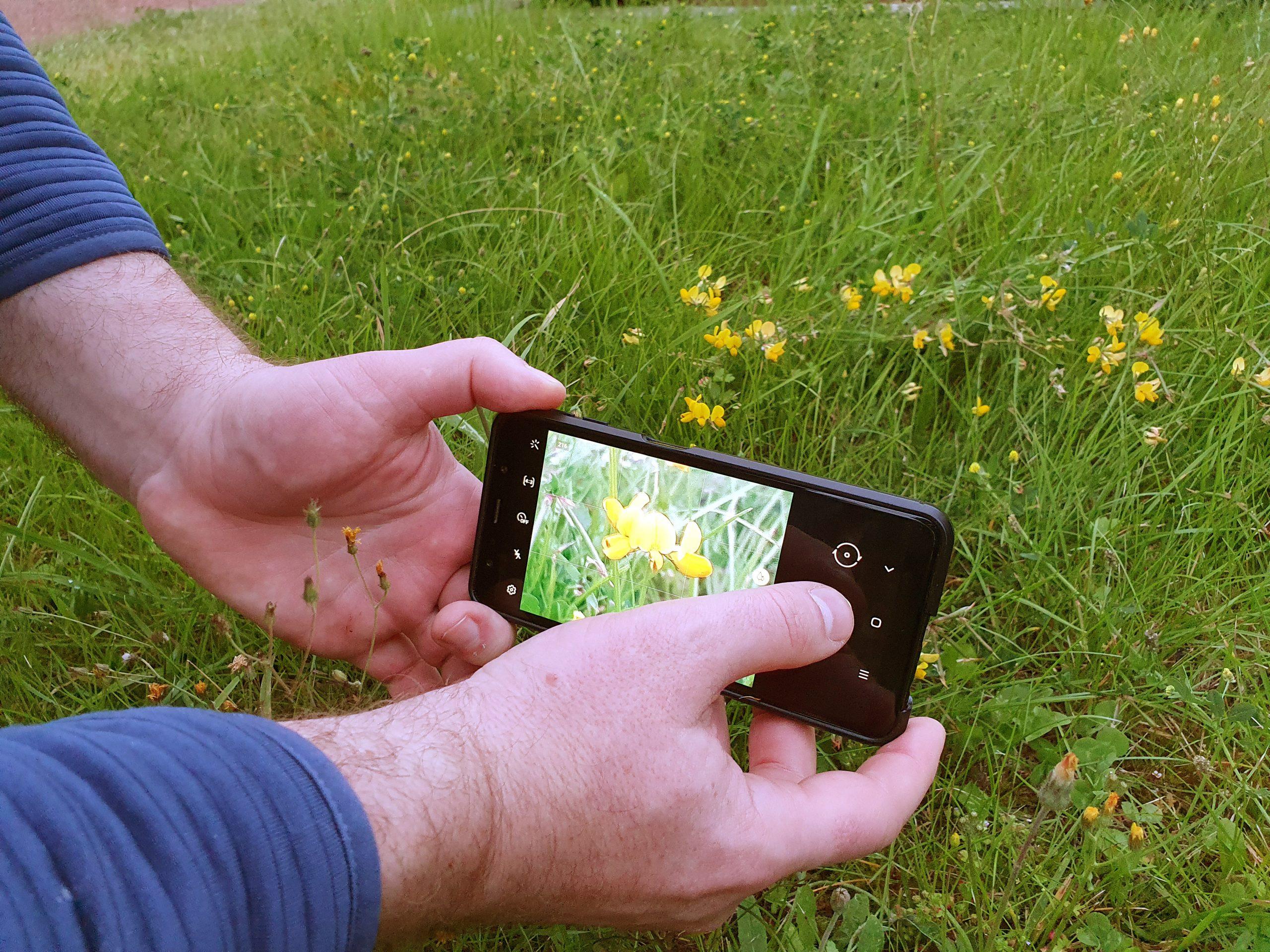 Mit einem Smartphone werden kleine gelbe Blumen fotografiert. Foto: SW